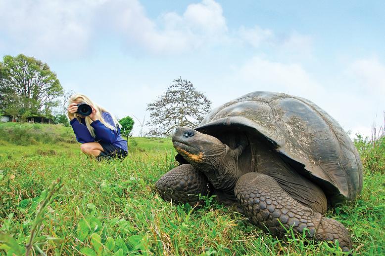 Gigant Turtle at Galapagos